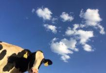 produzione di carne sostenibile