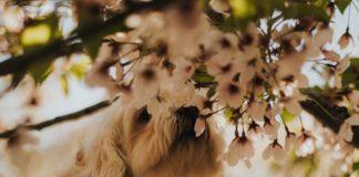 cane punto da un'ape