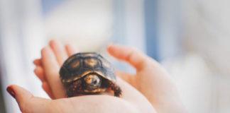 come portare un rettile dal medico veterinario