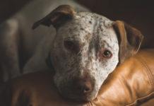 depressione nel cane