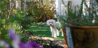 piante tossiche per il cane