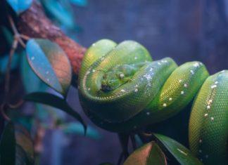terrario-per-un-serpente-arboricolo