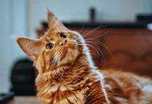 come comunicare con il gatto
