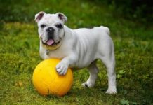 insegnare al cane come cercare un oggetto