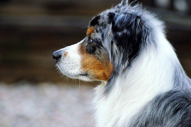 posso uscire a comprare un farmaco per il mio cane