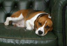 problemi comportamentali nel cane