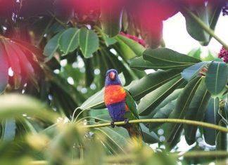 svezzamento nei pappagalli