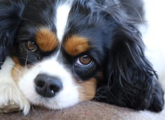 trauma nel cane e nel gatto
