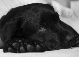 cane respira con affanno cosa posso fare