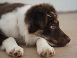 cane strofina il sedere per terra 1