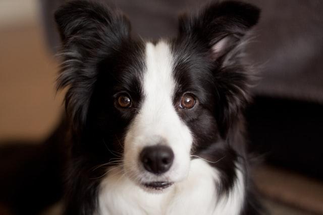cane strofina il sedere per terra