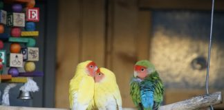 coronavirus negli uccelli