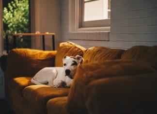 in-casa-con-gli-animali