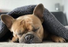 problemi del sonno nel cane