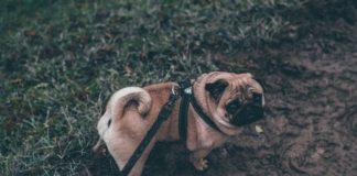 uscite cani quarantena
