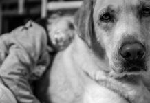 convivenza-tra-animali-e-bambini