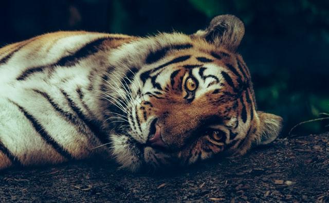 covid-19 animali selvatici