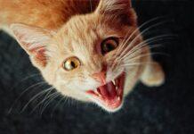 gatto-cade-da-un-balcone