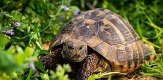ho-trovato-una-tartaruga