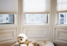 cane affitto