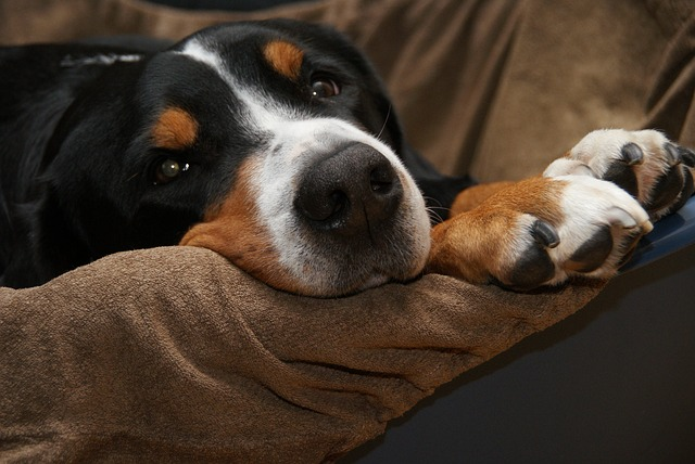 come-dimostrare-di-essere-il-proprietario-di-un-cane