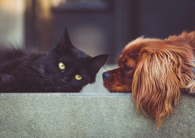 convivenza-tra-cane-e-gatto