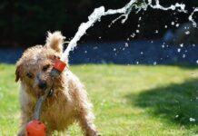 estate e animali domestici