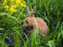forasacchi-e-conigli