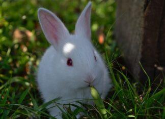 forasacchi-nel-coniglio