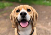 interventi assistiti animali covid-19 (2)