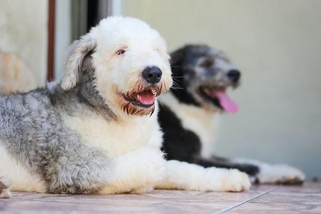 aggressività tra cani