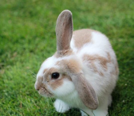 aiutare il coniglio a sopportare il caldo