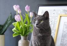 alimenti-pericolosi-per-il-gatto