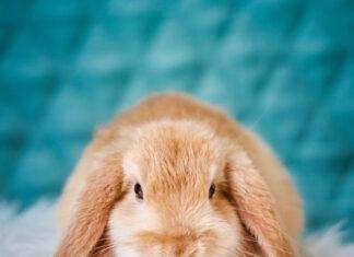 fare il bagno al coniglio
