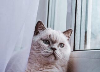 calore gatta