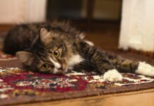 casa cat-friendly