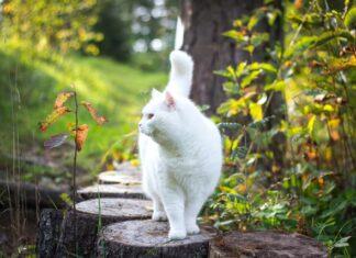 gatto pensione