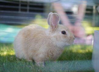 sensi-del-coniglio