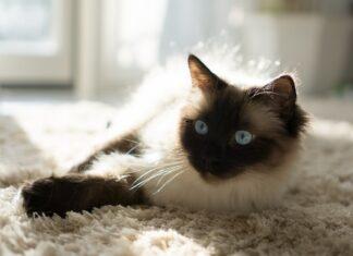 viaggiare-in-auto-con-il-gatto