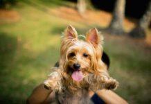 cane-senza-microchip