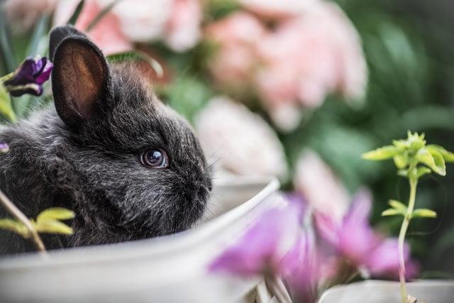 come-lavare-un-coniglio