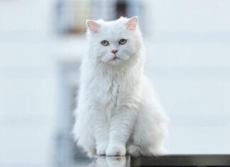 gatto-graffia-il-divano