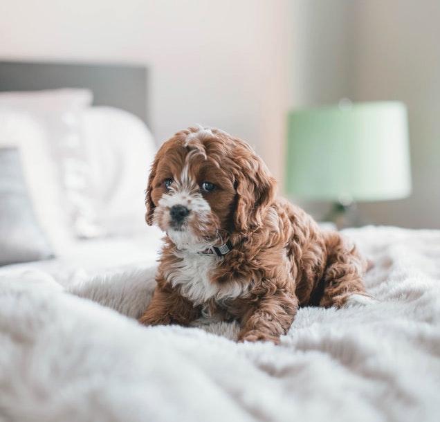insegnare al cucciolo a non sporcare in casa