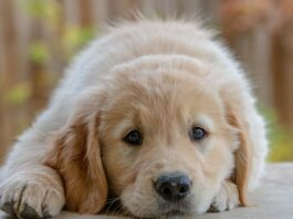 allergia alimentare cane