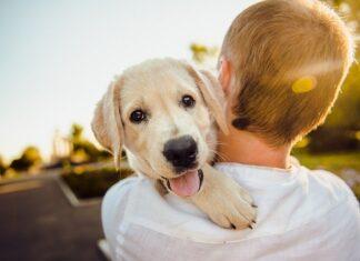 cane equilibrio emotivo
