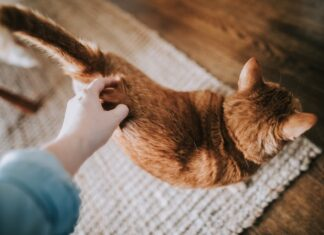 crocchetta preferita dai gatti