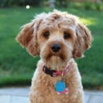 flora intestinale del cane