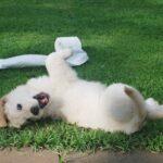 salute articolare cane