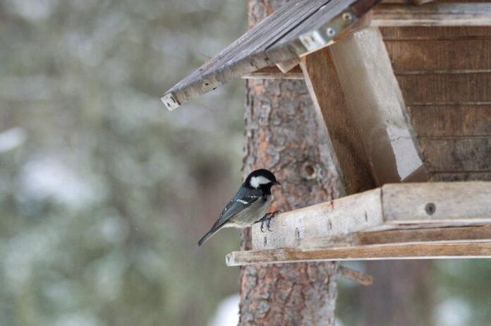 Mangiatoia-per-uccelli-con-cincia-mora-Ph-Emanuela-Redaelli