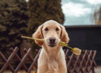 cane-vuole-scappare-da-casa